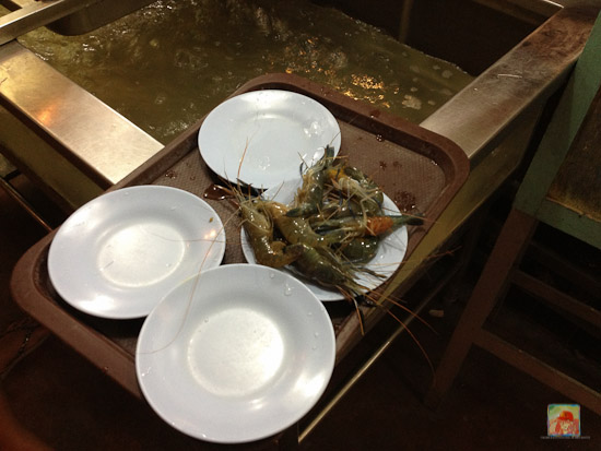 You can catch your own live prawns...