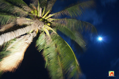 My attempts to create some artsy night photos…