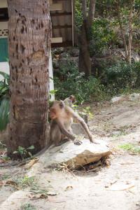 Khao Sam Roi Yod Road Trip